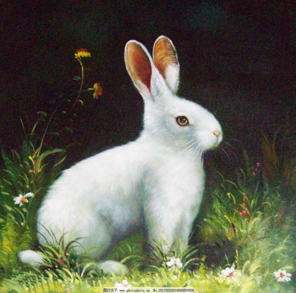 白兔子 美术 油画 现代油画 动物 白兔 花草 花朵 油画艺术 油画作品9