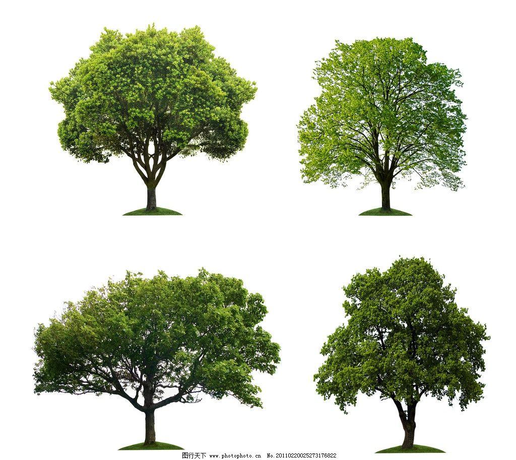 设计图库 生物世界 树木树叶  树木 大树 白色背景树木 树木高清图片