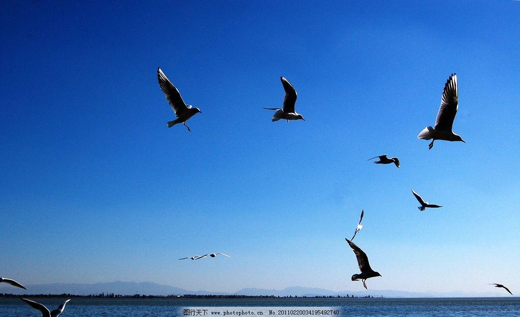 海阔天空 海鸥 大海图片