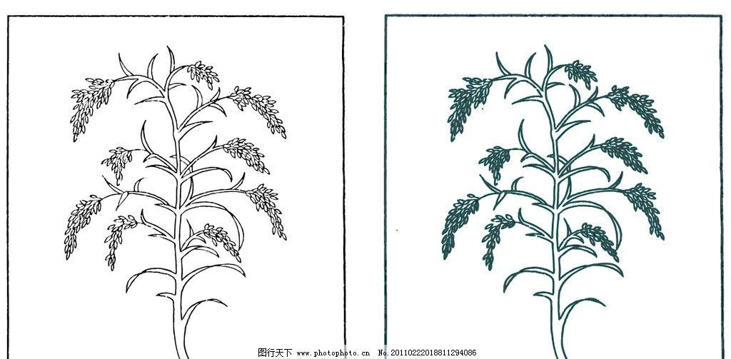 稻谷 谷穗 稻穗 矢量图片