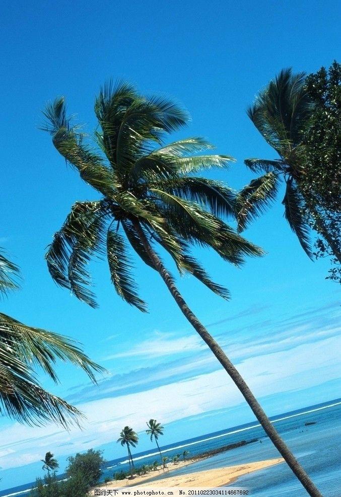 美丽的海滩 海水 椰树 蓝天 沙滩 自然风景 旅游摄影 摄影 72dpi jpg