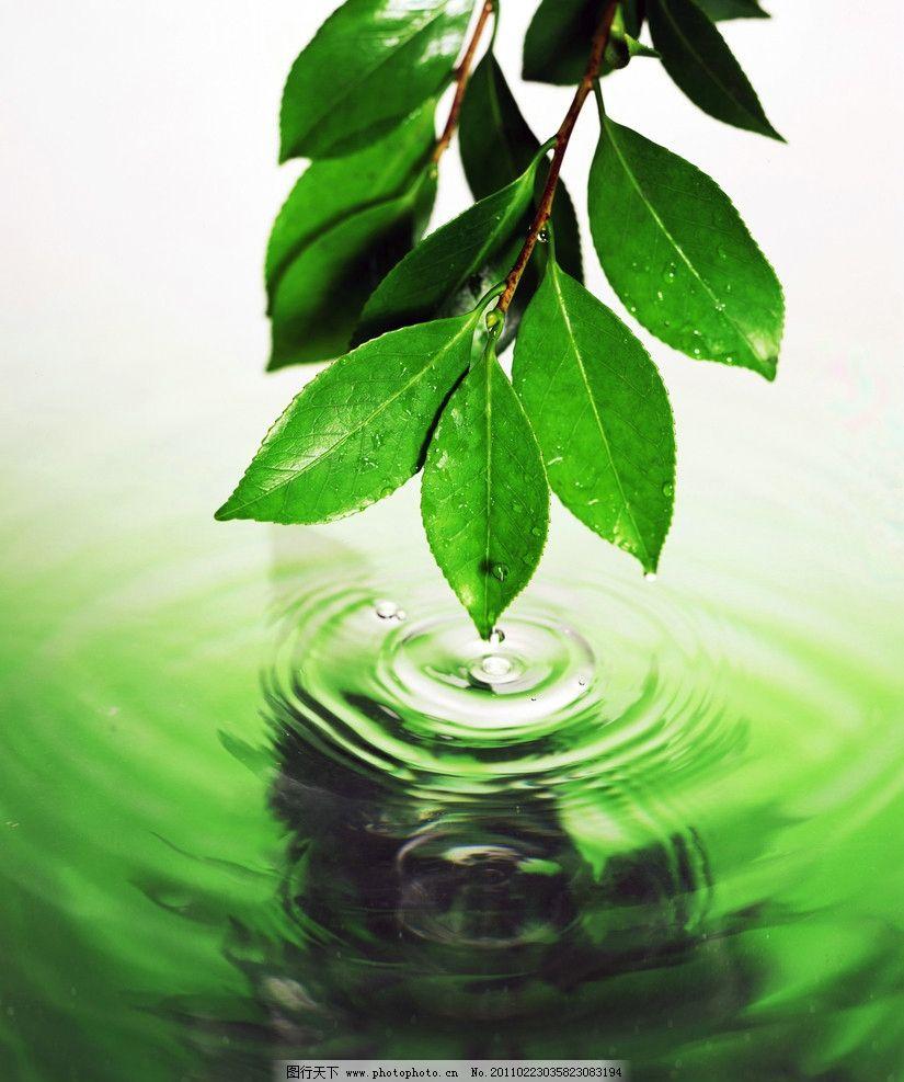 树叶点水 绿叶 叶子 树枝 水面 水滴 水纹 水珠 绿色 摄影