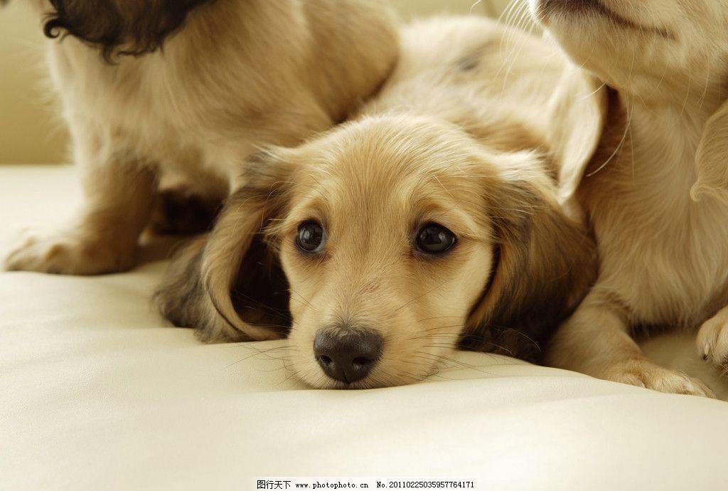 狗狗/乖巧的漂亮狗狗图片