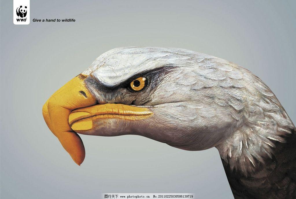 老鹰 彩绘 手 手指 动物 摄影
