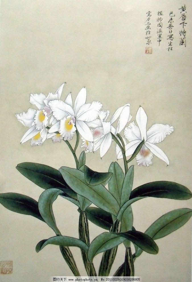 白色花瓣 黄色花蕊 盛开 朵朵绽放 绿色椭圆叶子 工笔画 美术国画