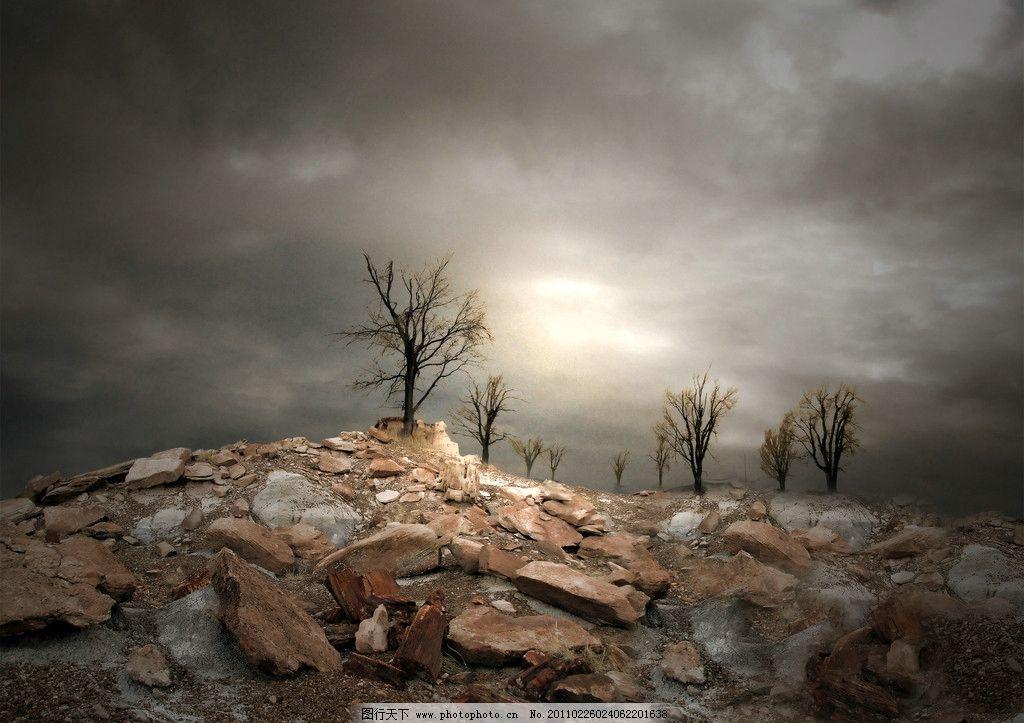 岩石堆上的枯树图片