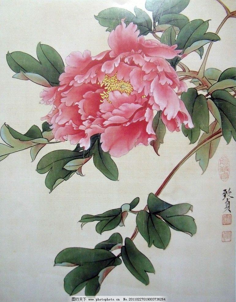 国画 牡丹花 花开富贵 盛开 粉色花瓣 绽放 工笔画 美术国画图片