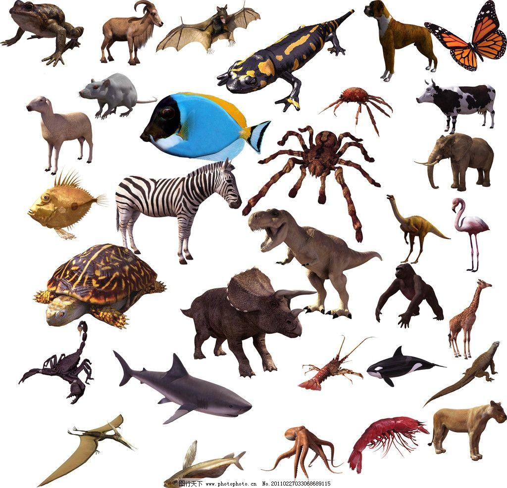 动物大全 动物 鱼 虾 恐龙
