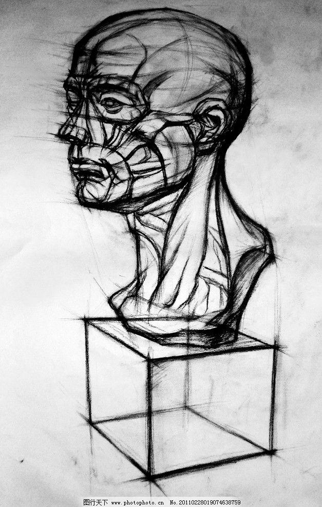 脸部结构素描图片
