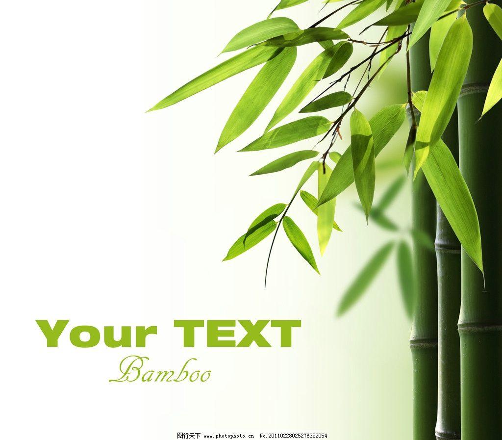 壁纸 风景 植物 桌面 1024_897
