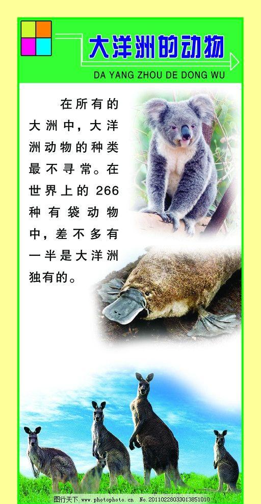 大洋洲的动物图片
