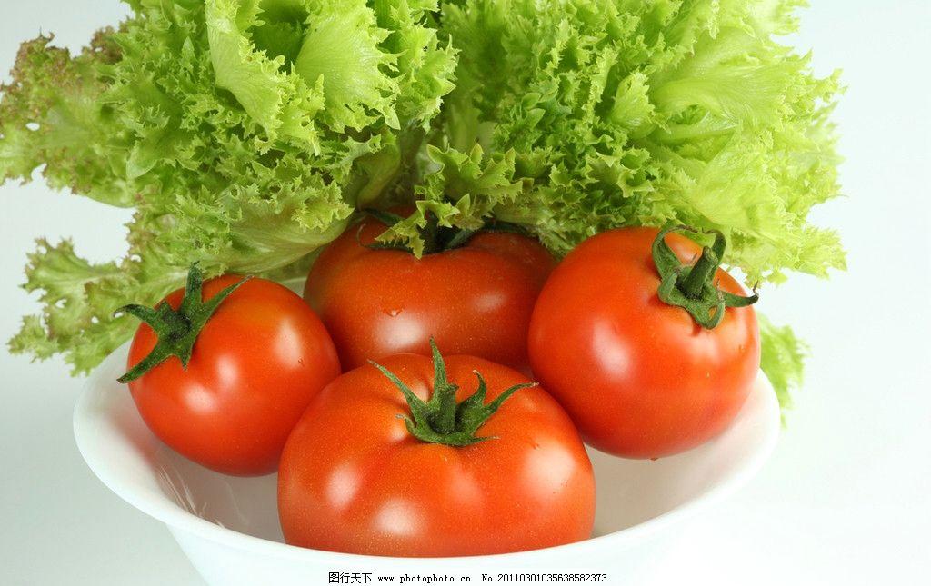 西红柿 生菜