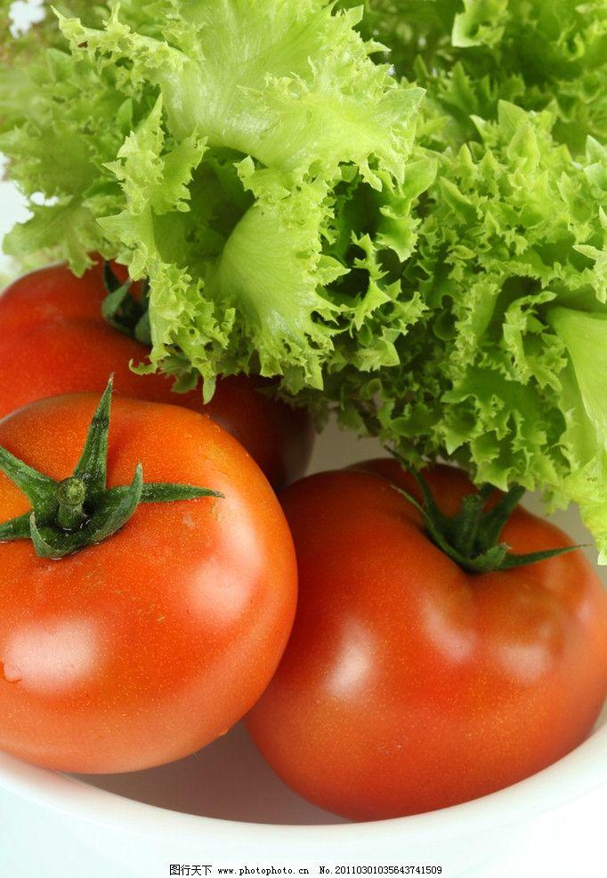 蕃茄 生菜
