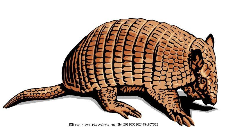 犰狳 矢量图 披甲猪 野生动物矢量 矢量动物