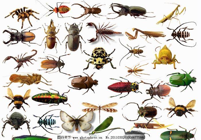 蟑螂可爱动画图
