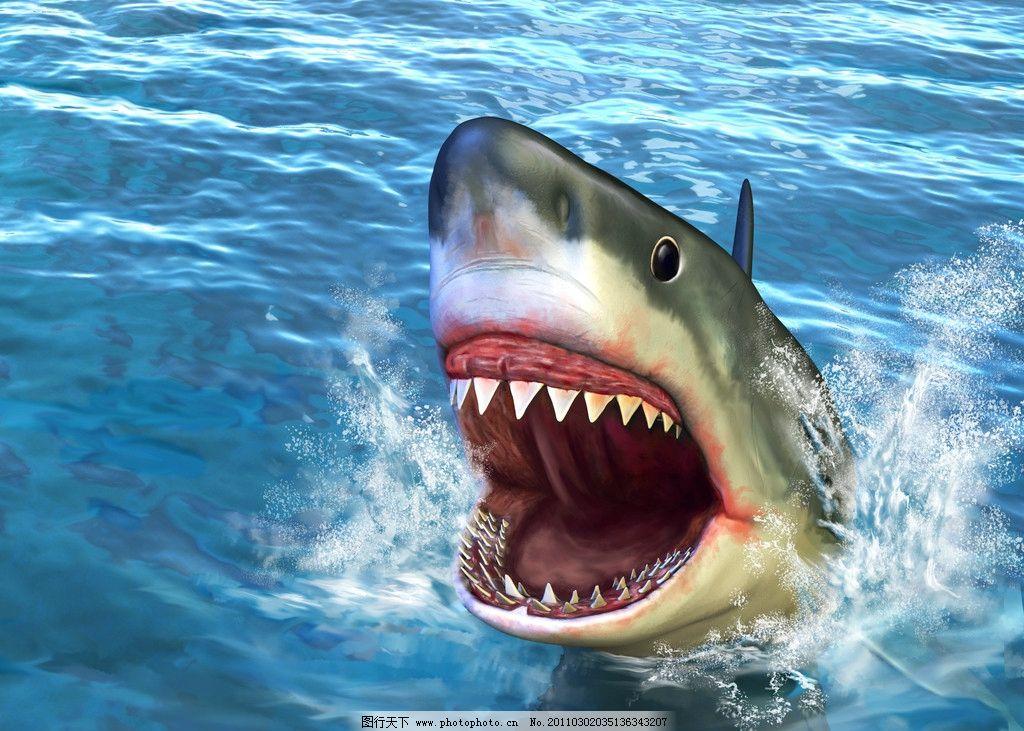 微笑的鲨鱼图片