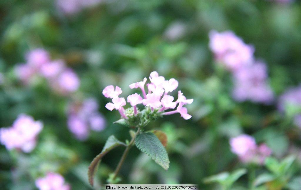 春天里的小花图片