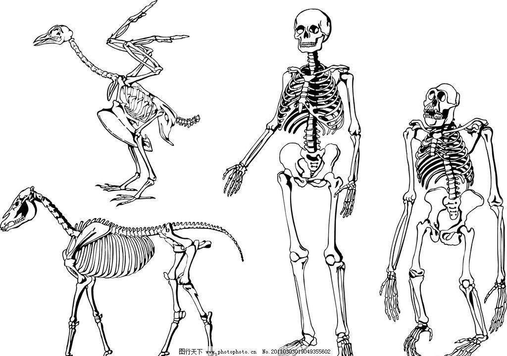 骨头图片_绘画书法_文化艺术