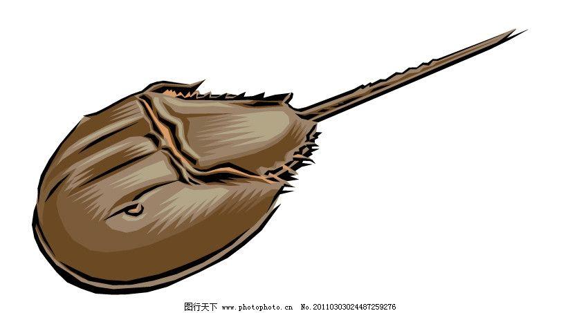 马蹄蟹 鲎 矢量图 保护 野生动物矢量 动物矢量图 爱护动物 野生鱼类