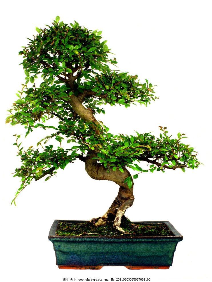 盆景 小树 园林 树木 树叶 景观 装饰 绿色 树木树叶 生物世界 摄影