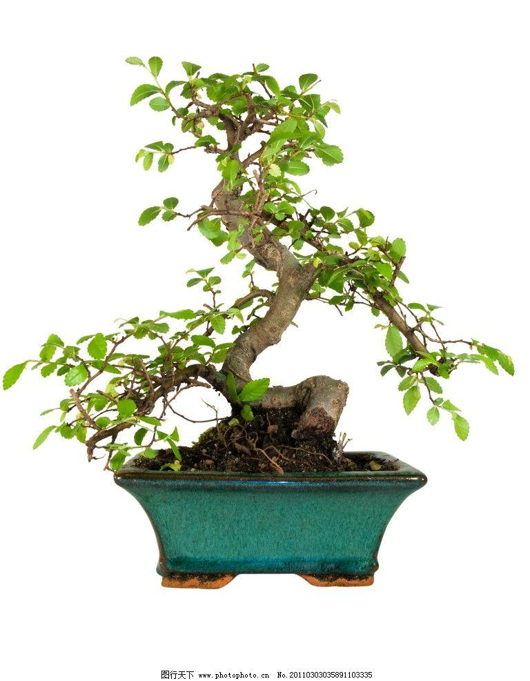 盆景 小树 园林 景观 装饰 绿色 树木树叶 生物世界 摄影 300dpi jpg