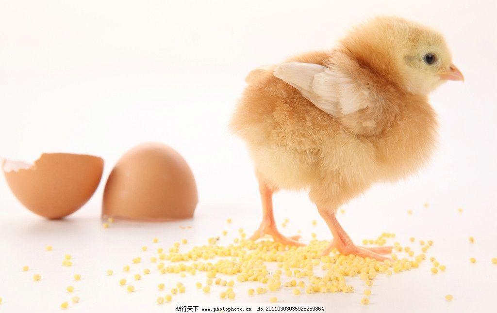蛋壳画图片动物