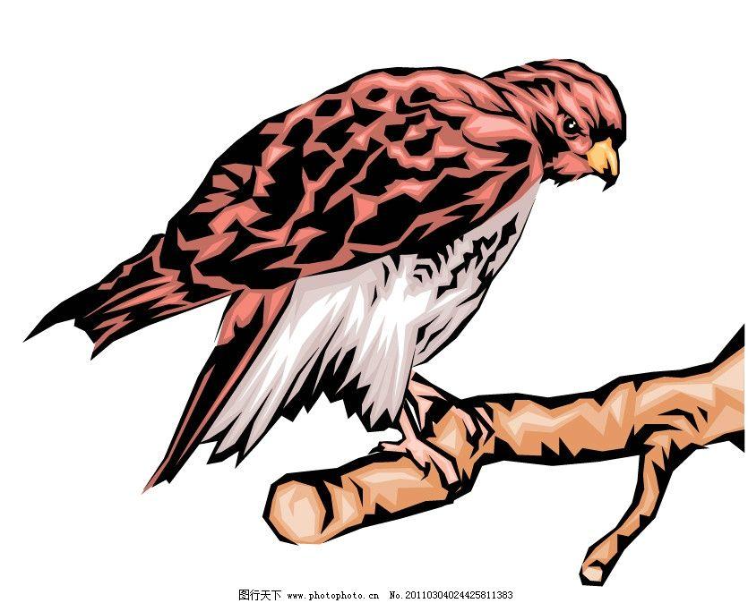 鹰隼 鹰矢量 隼矢量 矢量 野生动物 保护 野生动物矢量 动物矢量图