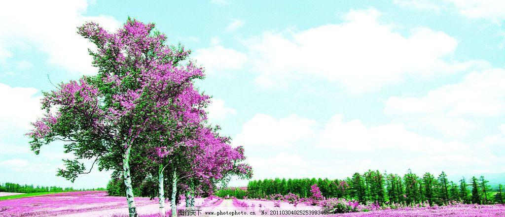 绚烂花树 装饰画 风景 树 蓝天 树林 路 紫色的草 树叶 树木树叶 生物