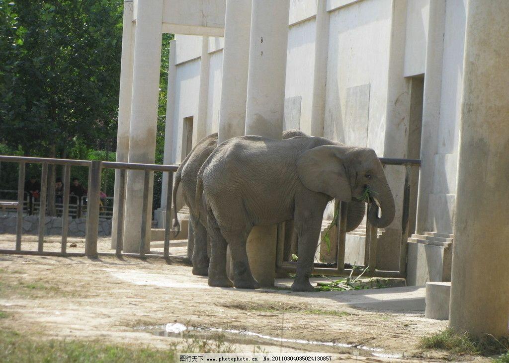 大象 动物园 野生动物 生物世界 摄影