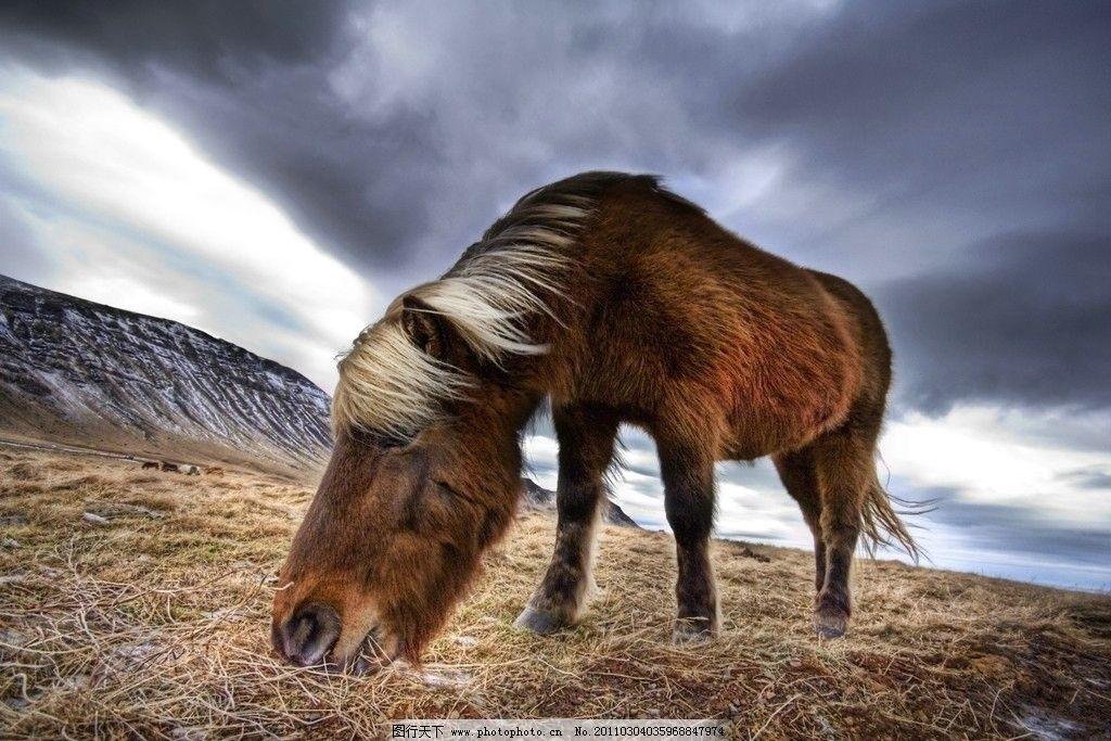 野马 马 动物 野生动物 动物世界 家禽家畜 生物世界 摄影 300dpi jpg