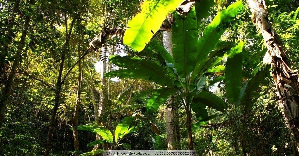 常绿乔木植物摄影高清图