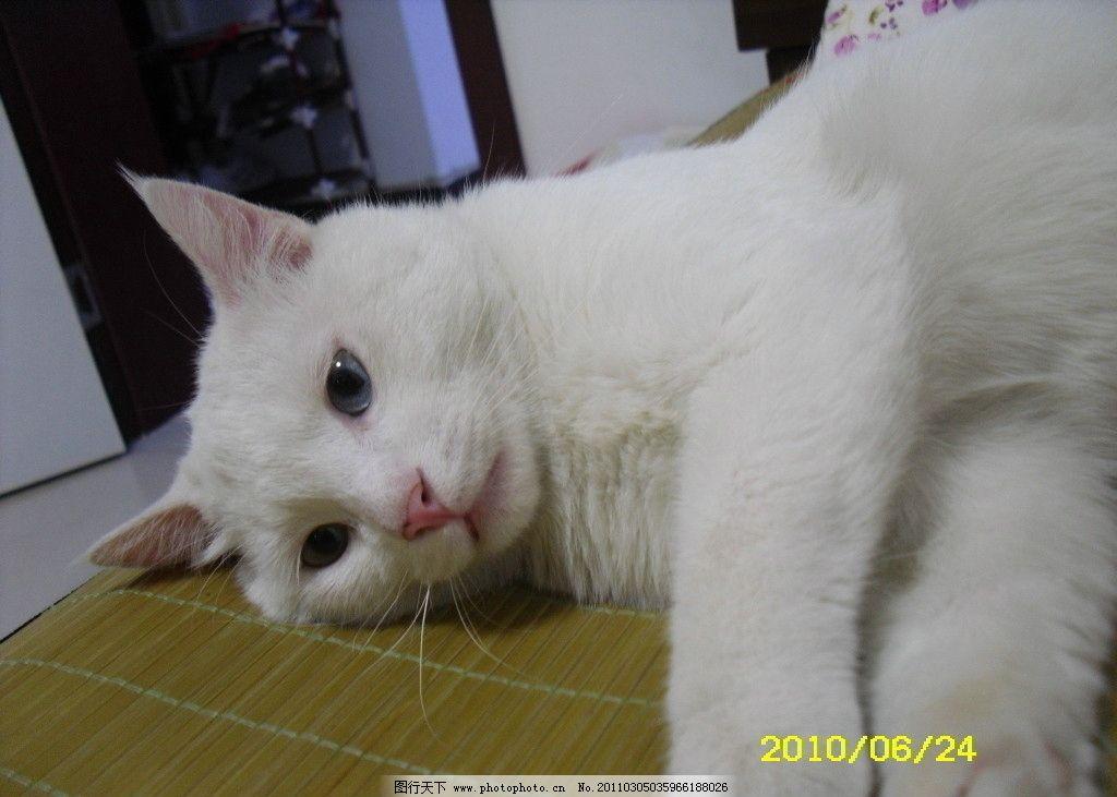 大眼睛猫咪图片