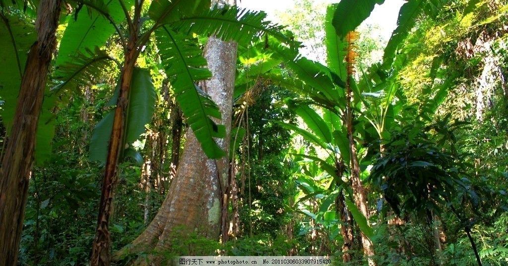 国家级自然保护区 植被 南亚热带植物 森林 树林 热带丛林 自然风景