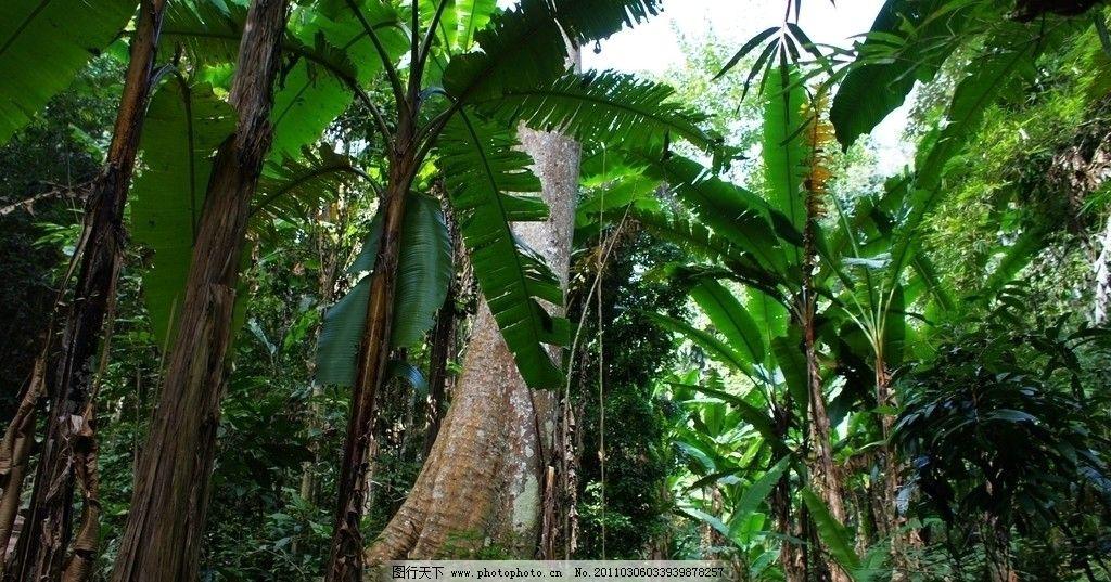 西双版纳热带雨林谷图片