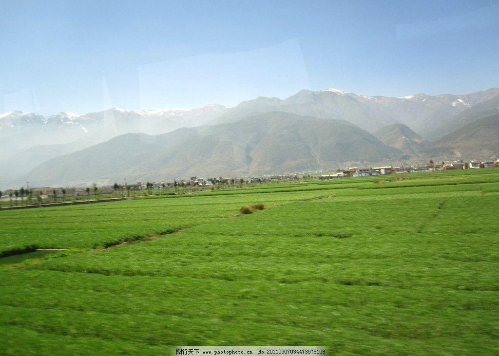 田地 绿色 春天 自然风景 摄影