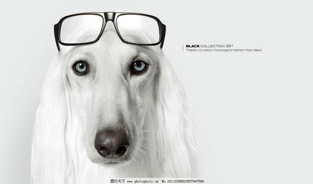 戴眼镜的小狗图片