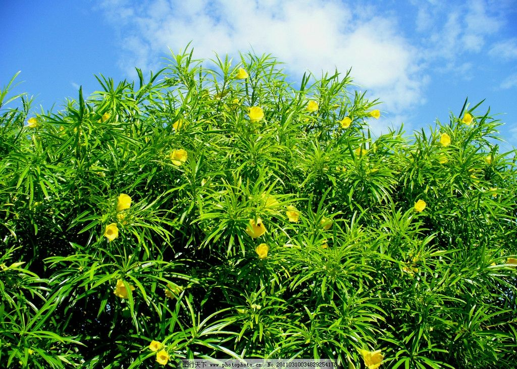 植物 绿树 树花 树 清新 树木 摄影图库 树木树叶 摄影 蓝天 自然风景