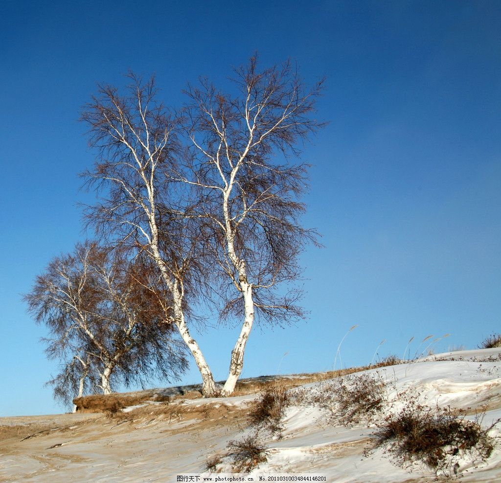 坝上风光 白桦树 冬天 坝上 自然风景 自然景观 摄影 220dpi jpg