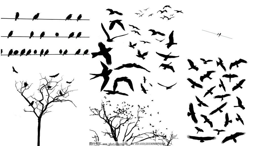 树枝与鸟影 电线杆上的鸟 燕子 飞翔 鸟类 动物 源文件图片