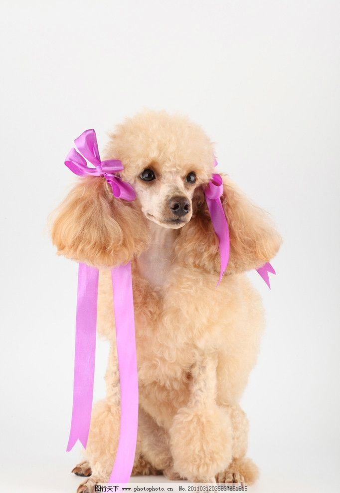 可爱的小狗 宠物狗 名犬 名狗 动物高清动物 摄影