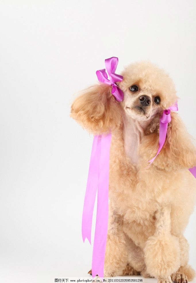 可爱的小狗 宠物狗 小狗 狗 名犬 名狗 宠物 动物高清动物 家禽家畜