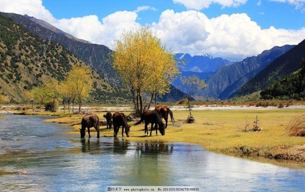 林芝 西藏 自然 山脉 动物 马匹 树木 生态 蓝天 白云 河流 流水 风景