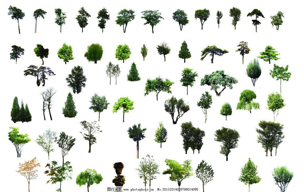 各种树木景观图片_园林设计_环境设计_图行天下图库