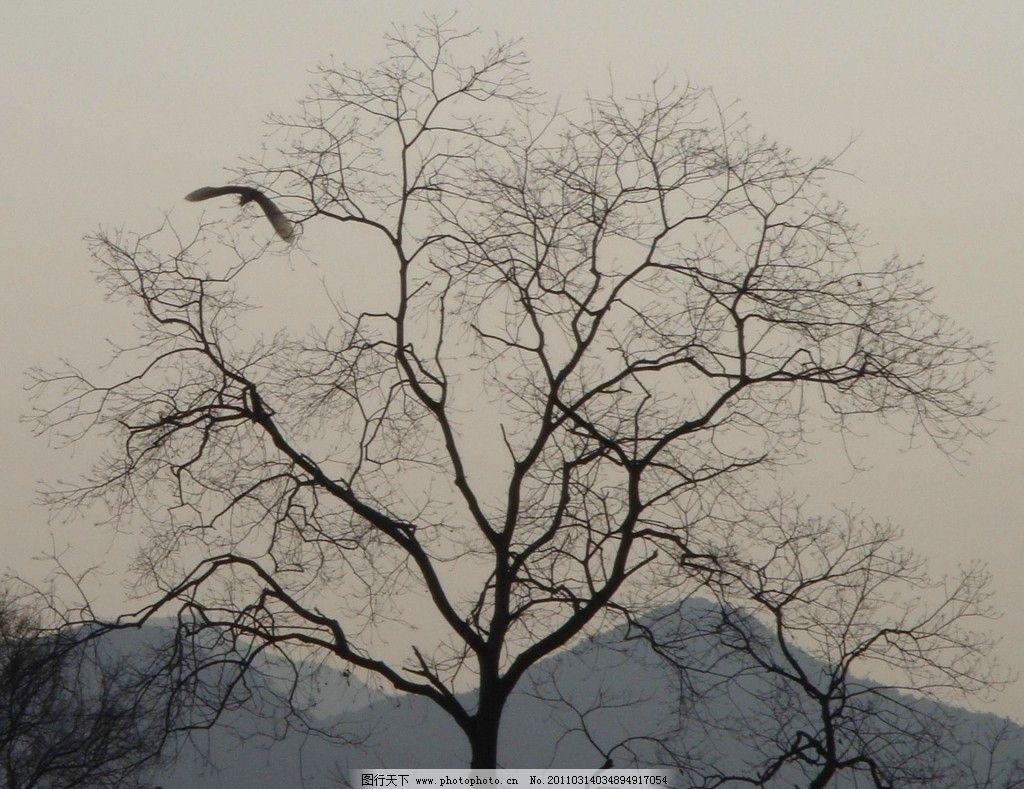 枯树昏鸦图片