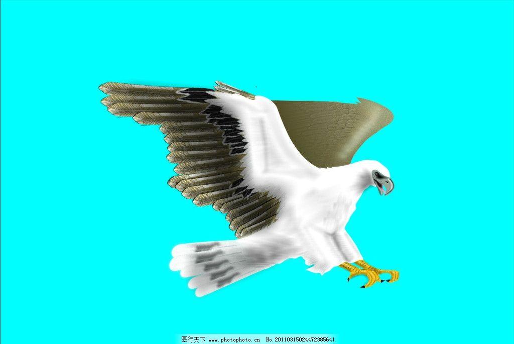 雄鹰小组手绘海报