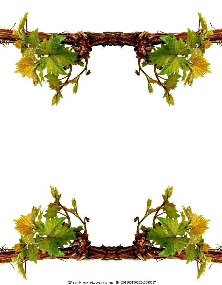 植物边框简笔画