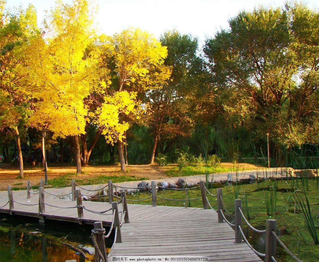 秋景 秋天 落叶 黄色 桥 水 自然 树林 身边小景 自然风景 自然景观