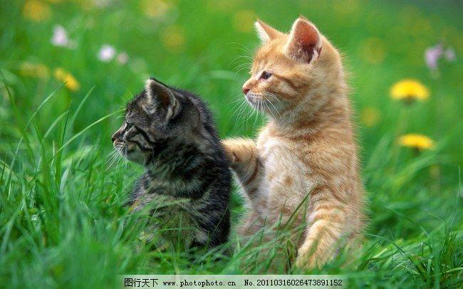 两只可爱的小猫