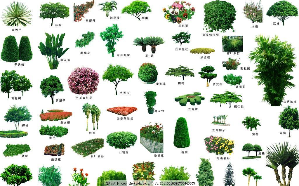 植物 景观设计 素材 ps后期处理 室外植物 环境设计配名 分层图 植物