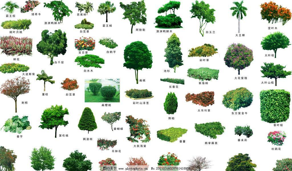 配名植物 园林配名素材集 景观植物 园林树 花 源文件 景观设计